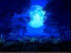 Elle_Moon's Avatar